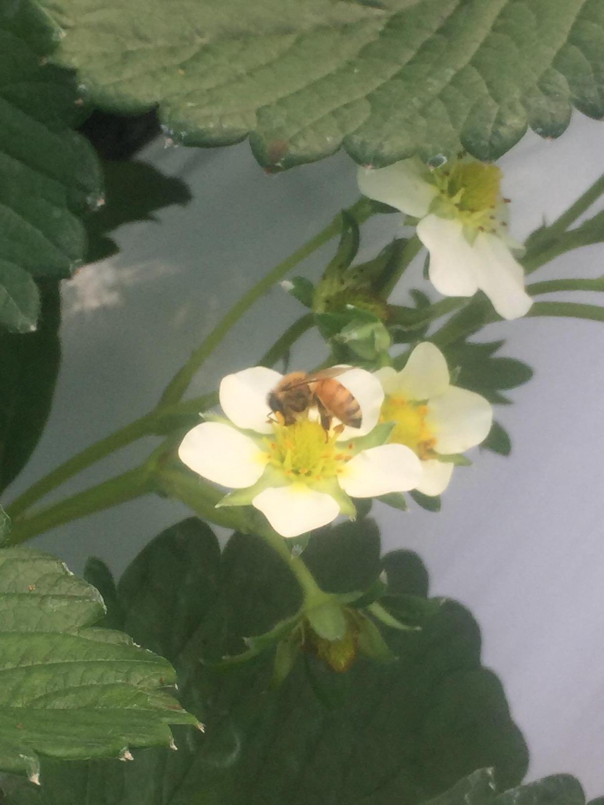 やさいの家ハチ